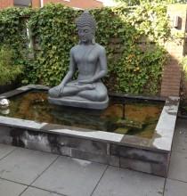 Vijver met Buddha
